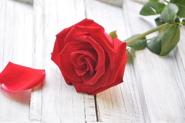 服务队伍温暖故事丨铿锵玫瑰,谱写真爱