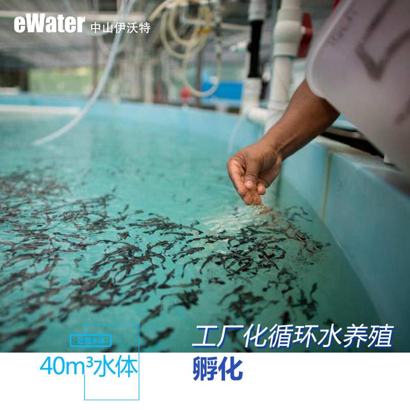 鱼苗孵化系统工厂化水产养殖 循环水处理系统
