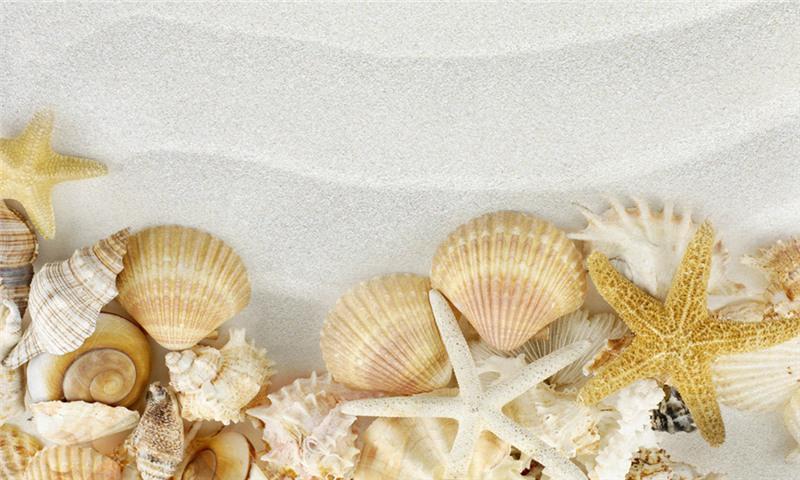 贝壳粉原材料