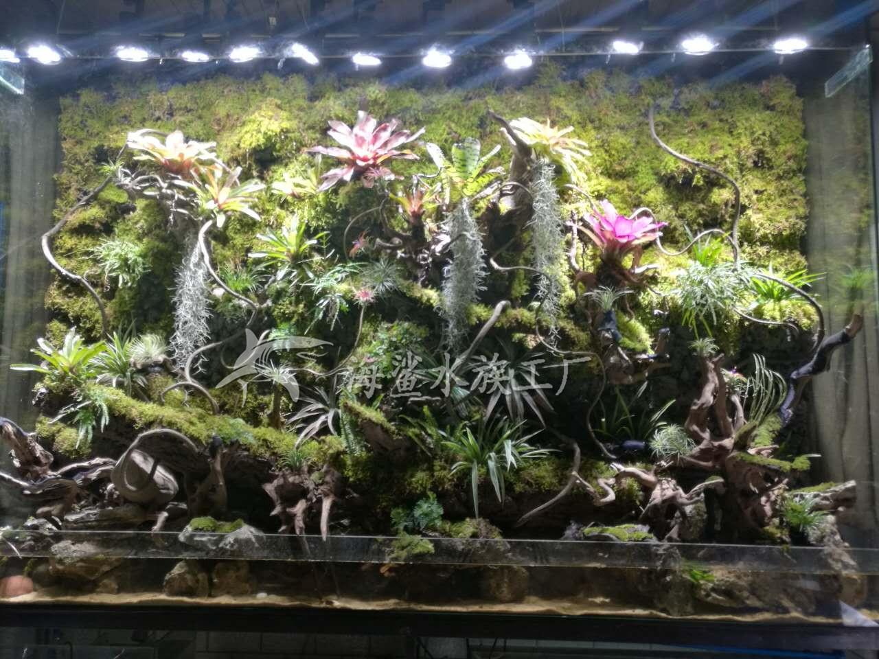 公司大型雨林缸/水陆缸/生态植物墙建造