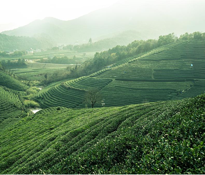 武夷山是乌龙茶的诞生地