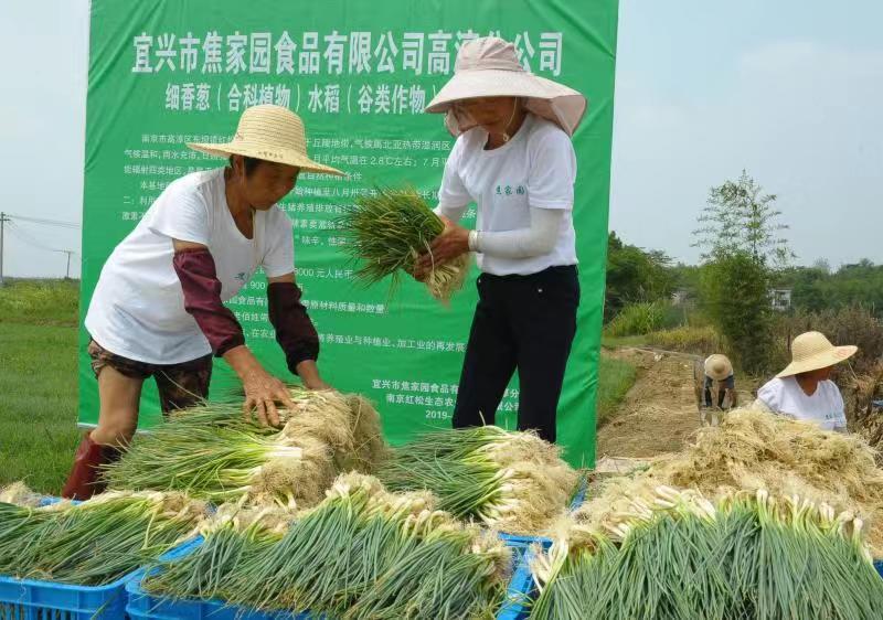 宜兴市焦家园食品有限公司高淳分公司 细香葱(合科植物)种植基地