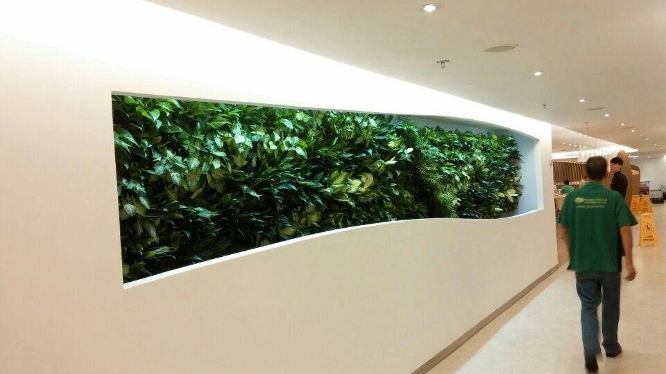 为什么要使用垂直绿化「植物墙」