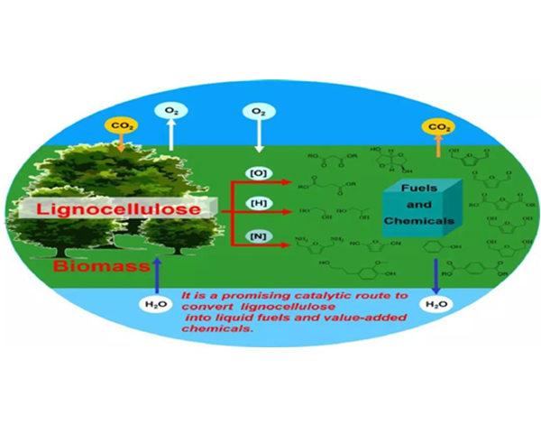 大化所木质纤维素制乙二醇、丙二醇、二元酸和航空燃料研究进展